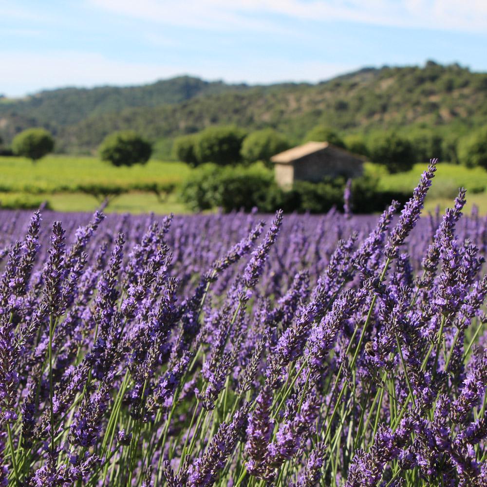 fabrication en Provence